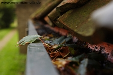IMG 7629a